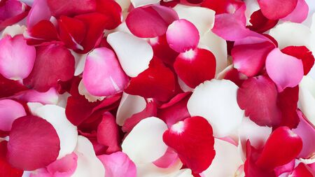 Background of rose petals