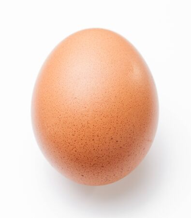 single animal: Single brown chicken egg on white background