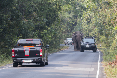 authorities: Nakornratchasima, Thailand - February 20, 2016: Park Rangers Authorities try to use the car to guide the Elephants back into the forest.