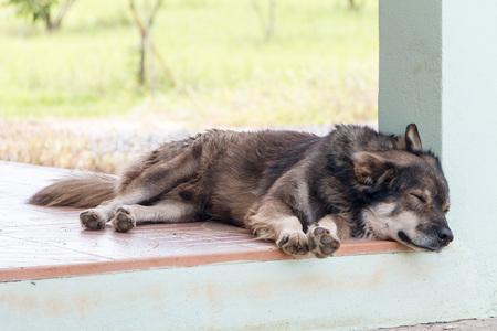 Brown dog sleeping in afternoon.