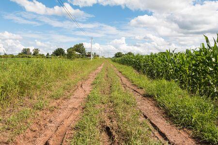 Road in the field. Summer Landscape