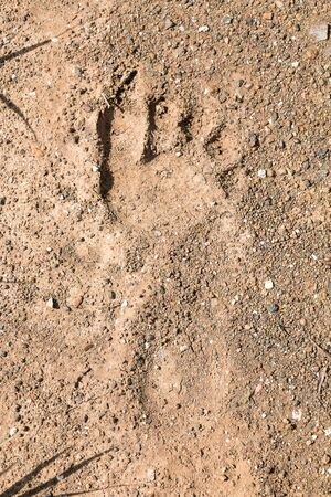 Human footprints on the ground, right foot.