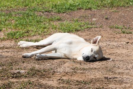 Dog sleeping in afternoon.
