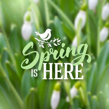 snowdrops: Spring blurred background with beautiful snowdrops. Vector illustration. Illustration