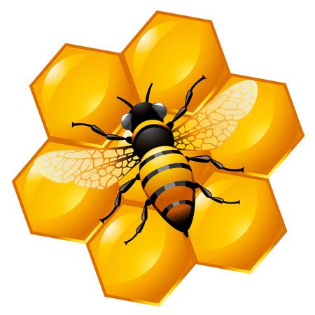 abeja caricatura: Abeja en una parte de nido de abeja, aislado en blanco. También puede ser utilizado como un icono.