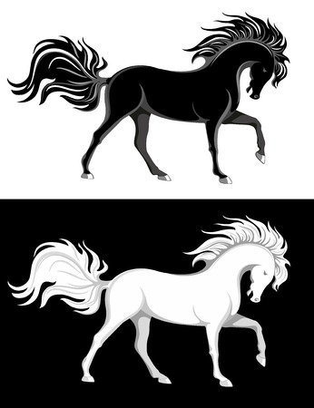 rebellious: Black and white purebred horses with luxurious manes