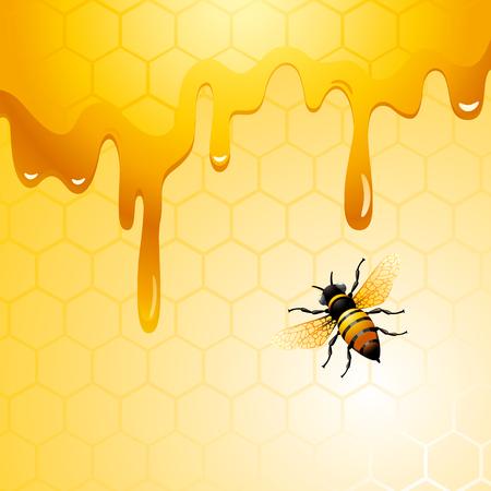 miel de abeja: Abeja en el panal. Antecedentes del diseño para usted.