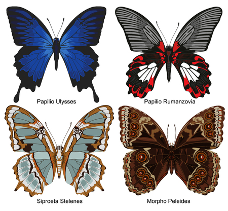 exotic butterflies: Four exotic butterflies with names Illustration