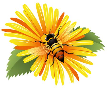 daisy vector: Bee on a yellow daisy. Vector illustration.
