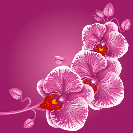 thai orchid: Excellent background with realistic vector illustration of orchid