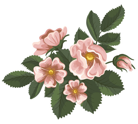 Branch of pink wild rose, painted in vintage style