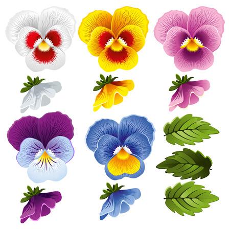 Pansy. Set di diversi fiori e foglie.