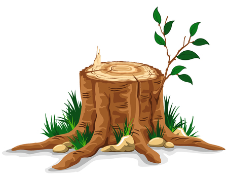 Young branch on the old tree stump. Detailed vector illustration.