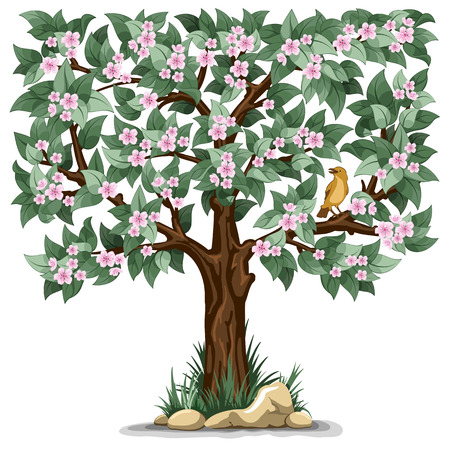 tree isolated: Spring flowering tree with bird isolated on white background