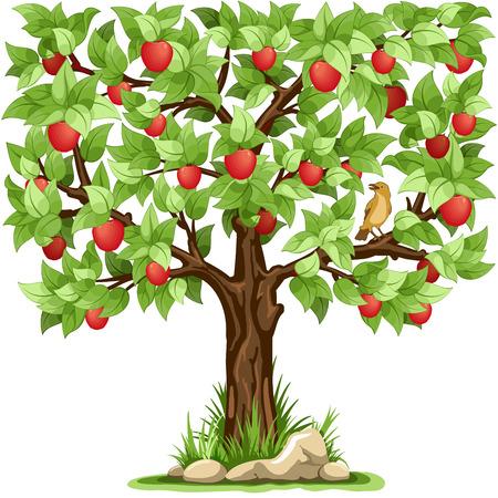 hojas de arbol: manzano de dibujos animados aislado en el fondo blanco