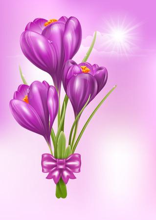 Crocus. Belles fleurs de printemps. Vector illustration.