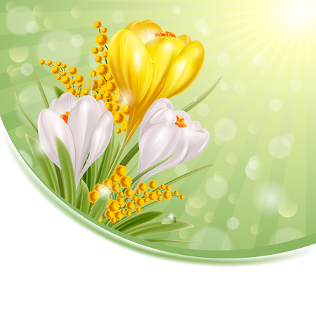 Crocuses. Beautiful spring flowers. Vector illustration.