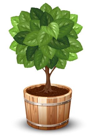 potting soil: Bonsai tree in wooden tub. Vector illustration. Illustration