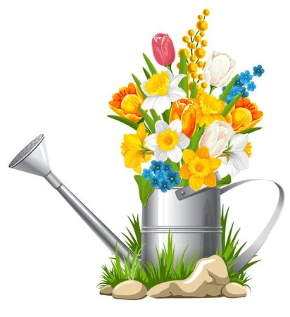 bailer: Fresh spring flowers in watering can. Vector illustration.
