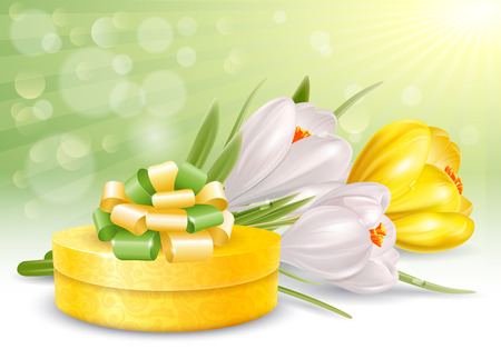 Holiday background with fresh crocuses and beautiful gift box