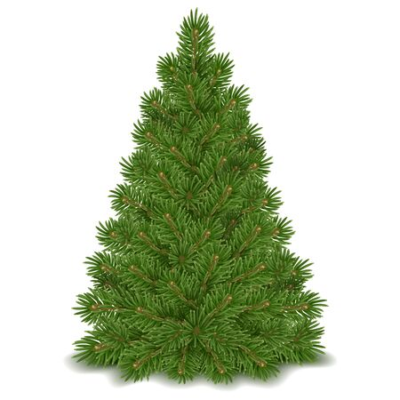 Fluffy green Christmas tree ready to decorating. Isolated on white background. Vector illustration.