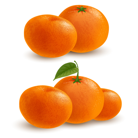 Fresh ripe mandarins or tangerines with leaf and without leaf isolated on white background. Realistic vector illustration.