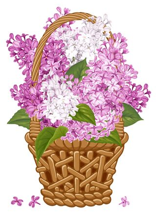 fragrant: Gentle fragrant violet and white branches of lilac in thatch wicker basket.  Vector illustration. Isolated on white background.