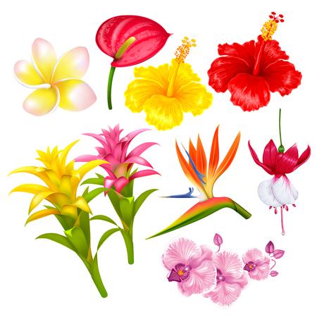 Tropische exotische Blumen des Sommers eingestellt. Vektor-illustration Isoliert auf weißem hintergrund