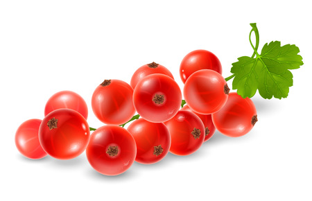 Red currant sprig. Fresh ripe berries of red currant on branch with leaf. Realistic vector illustration. Isolated on white background.