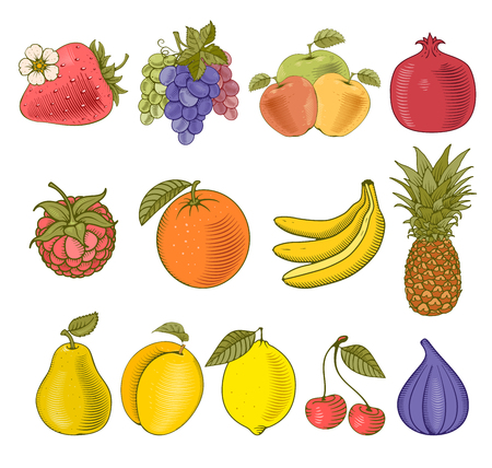 Fruits and berries collection. Vector illustration Isolated on white.
