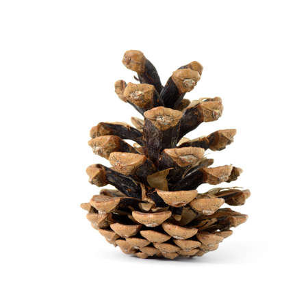 Isolated pine-cone on white background
