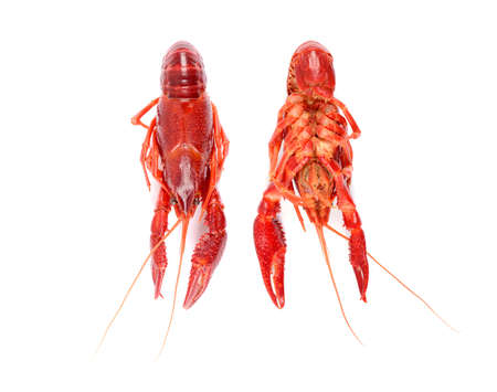 isolated two red raw crayfish on white background, from above and from below Banco de Imagens