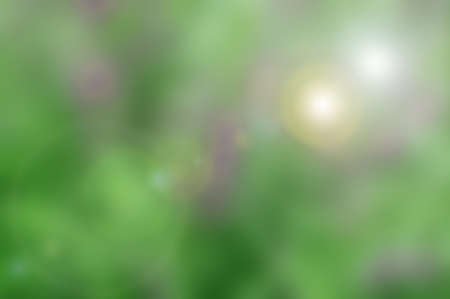 green tone: blured nature background with green tone
