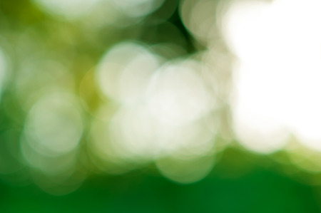 blurred of green nature background abstractblurred of green nature background abstract