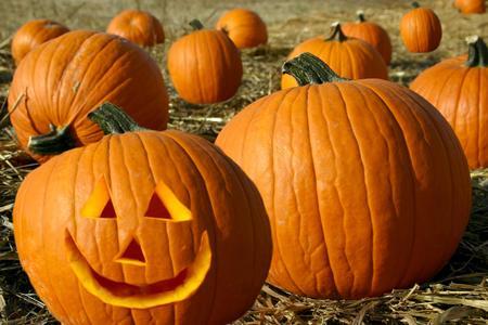 Jack O Lantern in the Pumpkin Patch