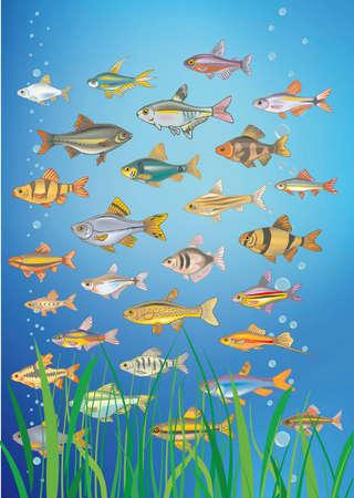 inmersion: peces de agua