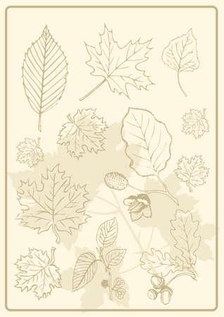 foliage evergreen Vector