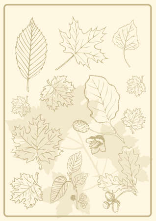foliage evergreen Stock Vector - 9113484