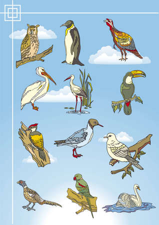bird drawings Vector