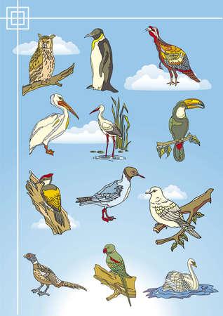 bird drawings Stock Vector - 9765955
