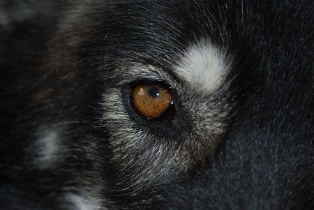 mushing: Canine eye
