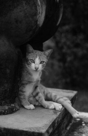 grey cat: Cat sitting under stone statue : in black and white filter