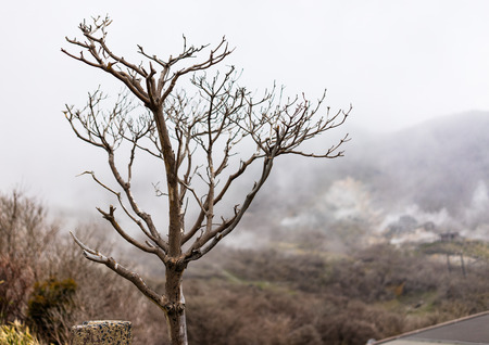 Leafless tree on a misty day. Expressing loneliness mood in winter season.