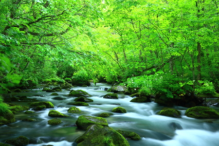 Oirase stream of fresh green. Stock fotó
