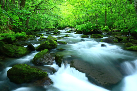 Oirase stream of fresh green. Stock Photo