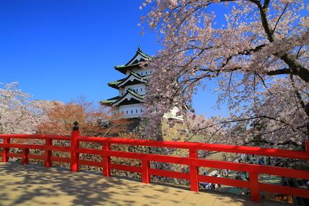 castle district: Aomori hirosaki Cherry Blossom Festival