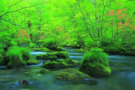 Oirase stream of 3 random flow