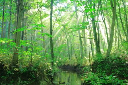 prefecture: Aomori Prefecture 8 hakkoda, forest