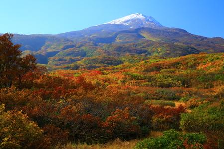 Foliage of the chokai mountain Dragon Moor