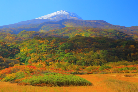 moor: Foliage of the chokai mountain Dragon Moor